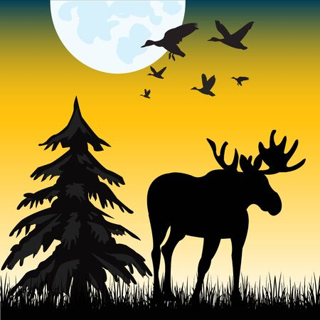 conifer: The Silhouette moose on glade in the night.Vector illustration