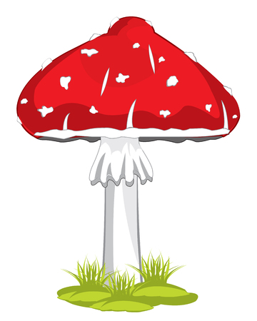 uneatable: Poisonous mushroom fly agaric on white background is insulated