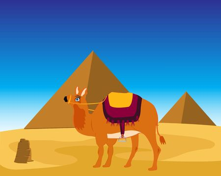 archeology: The Landscape of the egyptian pyramids and animal camel.
