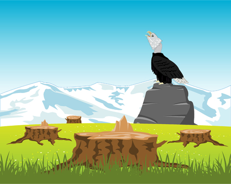 snow field: Bird eagle sits on stone in the middle glade and stump