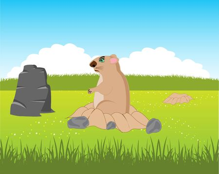 peers: The Animal rodent woodchuck peers out burrow.Vector illustration