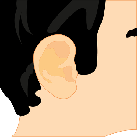 rumor: The Organ of the rumor of the person ear.