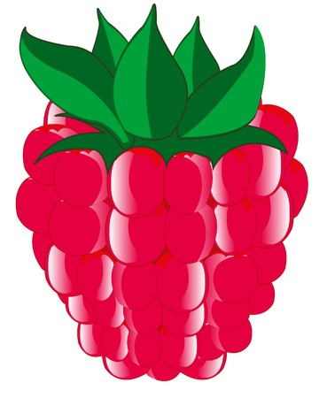 pleasing: illustration of the ripe berry of the raspberry Illustration