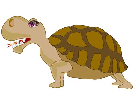 carapace: Cartoon animal terrapin on white background is insulated