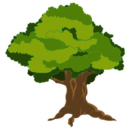 insulated: Green tree with foliage on white background is insulated Illustration