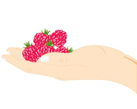 Berry raspberry in hand of the person on white background
