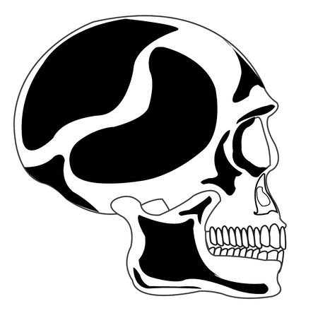 teeths: Skull of the person
