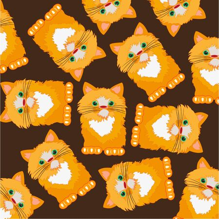 Redhead cat on white background is insulated