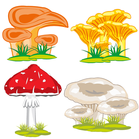 fly agaric: Mushrooms edible and poisonous on white background is insulated