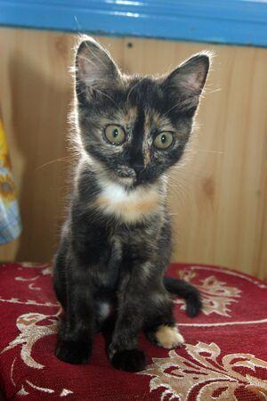 Small skinny kitty