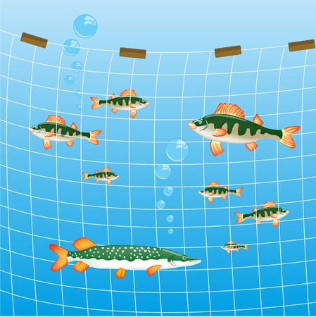 Filet de pêche dans la rivière et beaucoup de poissons de rivière Banque d'images - 87052974