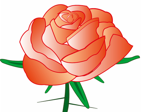 Rose with thorn Illustration