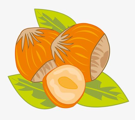 Nut hazelnut on white background is insulated