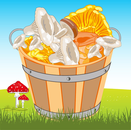 Pail full mushroom on glade by summer
