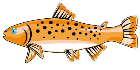 River fish trout