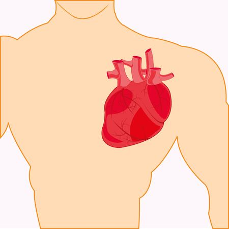 Body of the person and heart