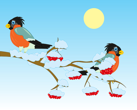 Winter branch of rowanberry with berry and birds bullfinch