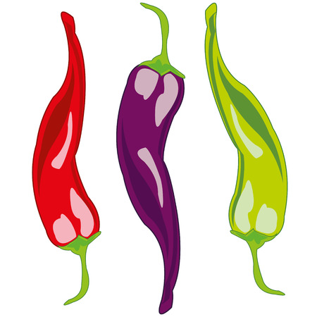 Vector illustration of the vegetable pepper chile of the varied colour Illusztráció