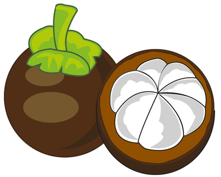 Vector illustration of the exotic fruit mangosteen