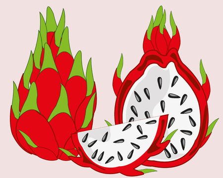 Vector illustration of the exotic fruit pitaya on white background
