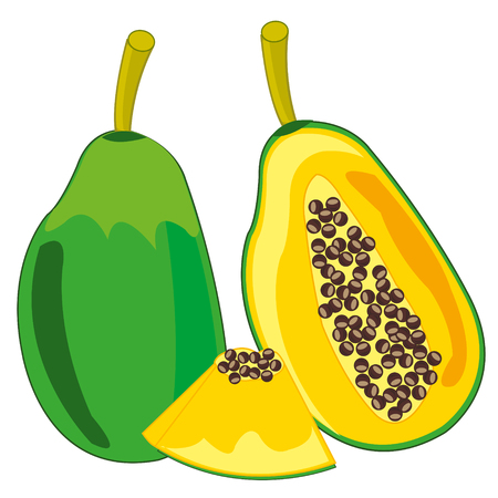 Vector illustration of the exotic tropical fruit papaya 일러스트