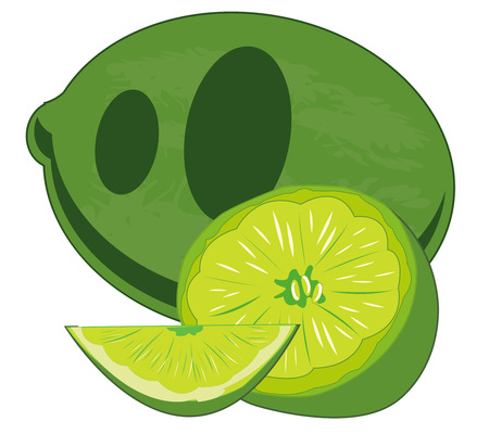 Vector illustration of the south fruit lime 向量圖像