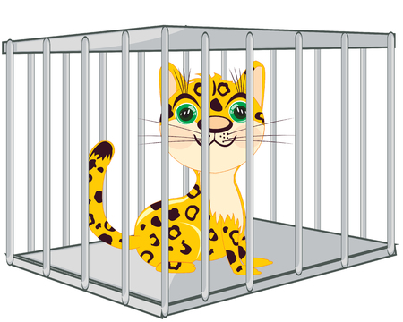 Wildlife leopard in iron hutch on white background is insulated