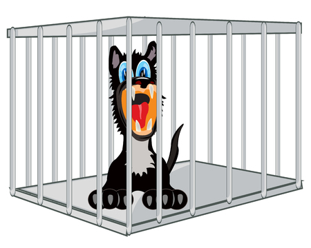 Animal wolf in iron hutch on white background is insulated