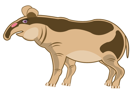 Animal tapir on white background is insulated