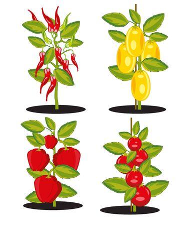 Vector illustration bush with ripe vegetable harvest