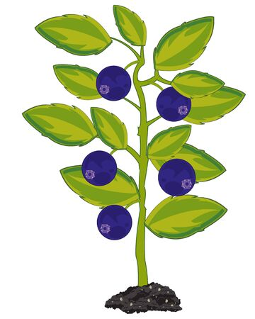 Vector illustration of the bush with ripe berry whortleberry Stock Illustratie