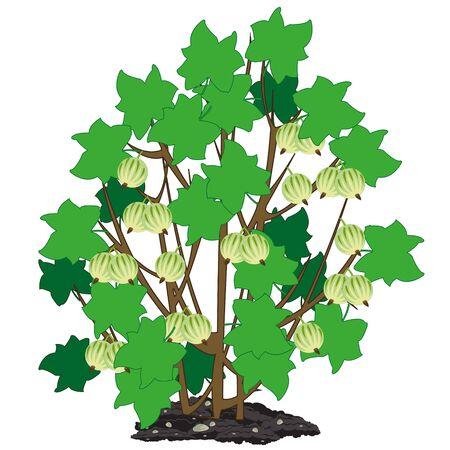 Illustration vectorielle du buisson de l'année avec des baies de groseille à maquereau