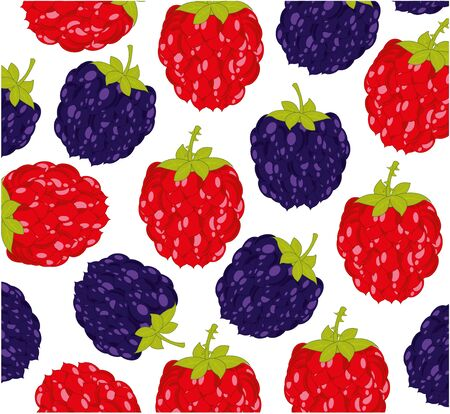 Berry raspberry and blackberry pattern on white background is insulated