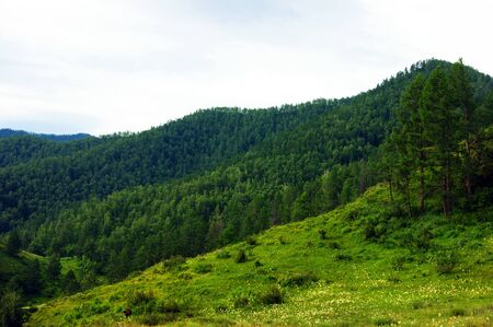 Year landscape of the mountain and glade 版權商用圖片