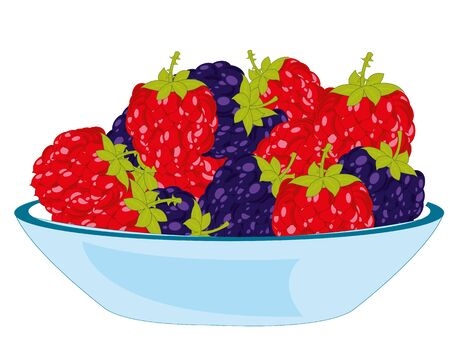 Vector illustration of the berry blackberry and raspberry on plate