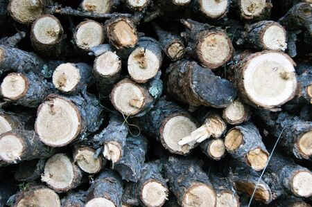 Built firewood from branches tree larch background