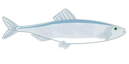 Fish herring on white background is insulated Ilustração