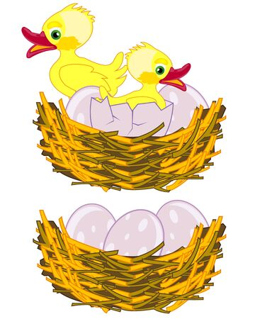Jack of the birds with egg and nestling on white background is insulated