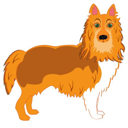 Vector illustration of the dog of the sort collie