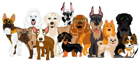 Vector illustration of the group of the dogs of the varied sorts Illustration
