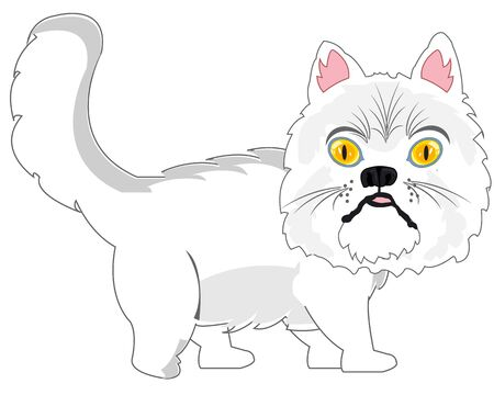 Persian cat on white background is insulated