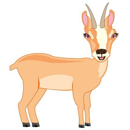Vector illustration of the cartoon wild herbivorous animal chamois