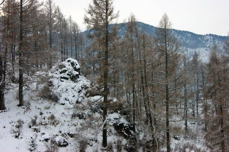 Landscape of the mountains and wood winter daytime Imagens