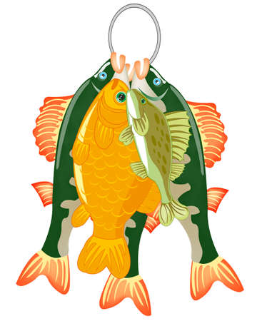 Caughted catch of fish on white background is insulated