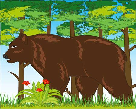 Wildlife brown bear in year wood daytime