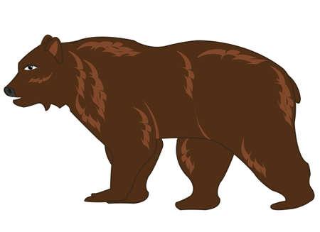 Vector illustration of the wildlife brown bear