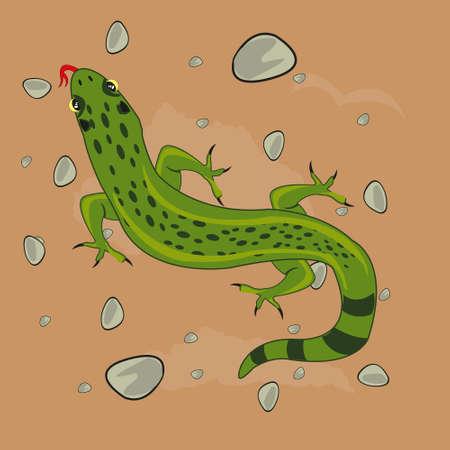 Reptile animal lizard in desert type overhand