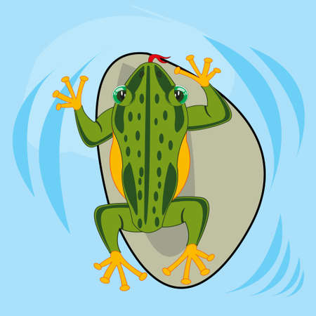 Reptile amphibious frog in water type overhand