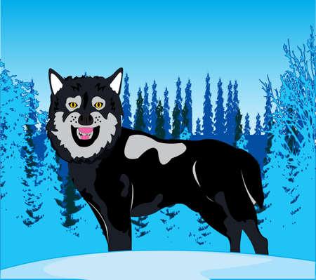 Wildlife wolf on background snow winter wood