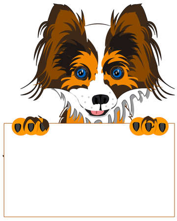 Dog of the sort pekingese with advertising clean sheet in paw 일러스트